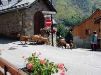 Farming life in La Villete, hamlet of Vaujany